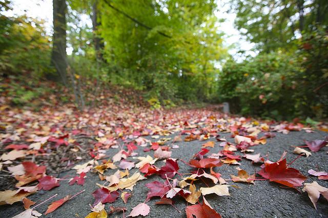 Fall_Post_Season